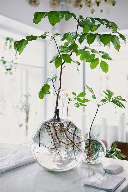 Branche d'arbre dans un vase