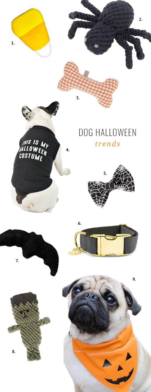 From fun toys to BOO-tiful apparel, get your pooch in on the festivities with these fun dog halloween themed gifts, costumes and trends.