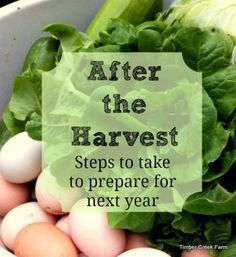 Useful tips for the end of the growing season. Be ready for next season's garden by taking some time after the harvest to get things ready for spring
