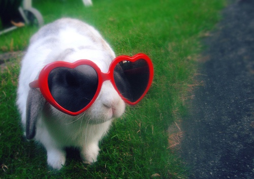 .Rabbit, Profile Pics, Red Glasses, Funny Humor, Mornings Coffee, Funny Stuff, Sun Protective, Bunnies, Animal