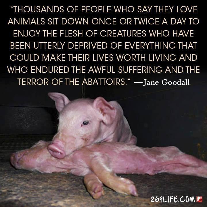 STOP factory farming - go vegan