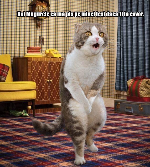 poze-amuzante-pisica-se-pisa-pe-covor_f0a59e44887492