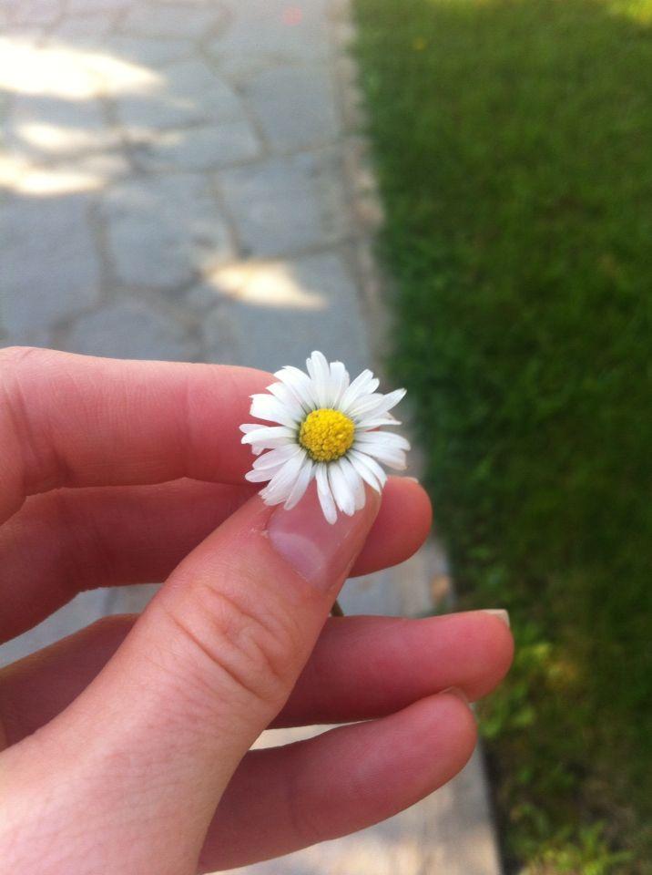 I found a lil flower
