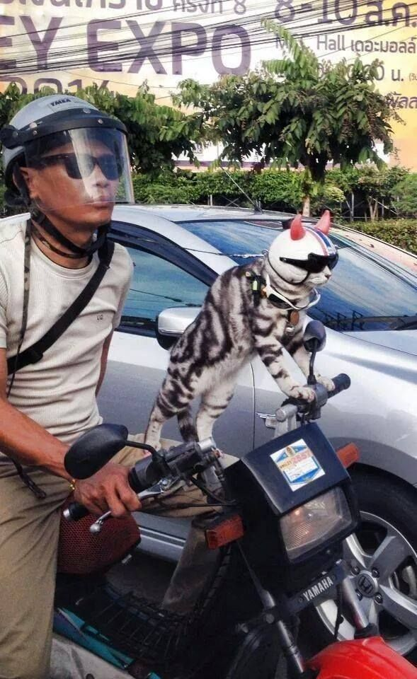 Wow that's a cool cat!