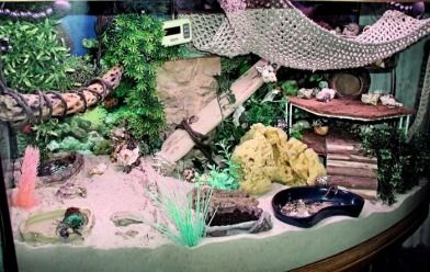 "(link) World Of Hermit Crabs! - Crabitat Supplies & info ~ NICE CRABITAT  ~ EXCEPT: substrate needs to be a minimum of 3x the height of tallest crab (usually min. 6"") and 5:1 ratio of Play Sand & EE Coco Fiber ~ for more great PINs w/good links visit @djohnisee ~ have fun!"