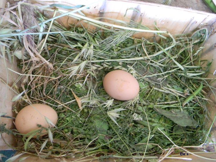 Palio dell'Uovo Pasqua a Tredozio  http://mediterranews.org/2013/03/pasqua-e-pasquetta-a-tredozio-con-sagra-e-paolio-delluovo/