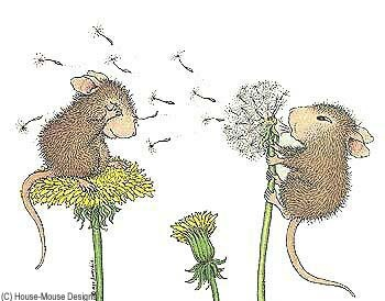 House Mouse [dandelion, Taraxacum officinale, Asteraceae]