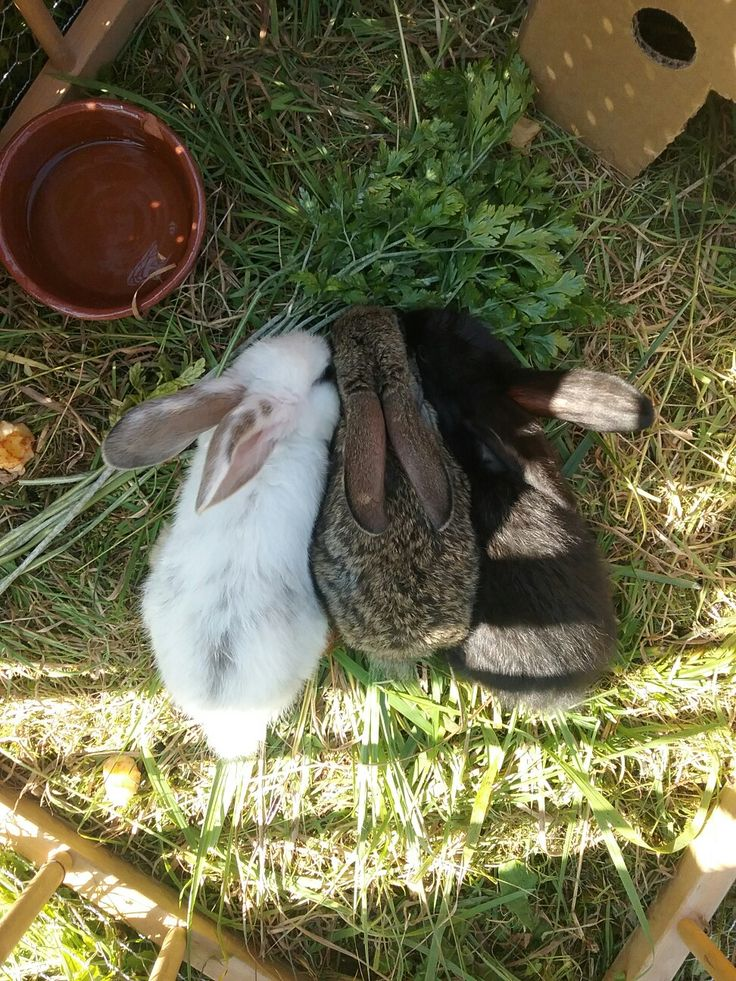 My adorable little bunnies!🐰💋