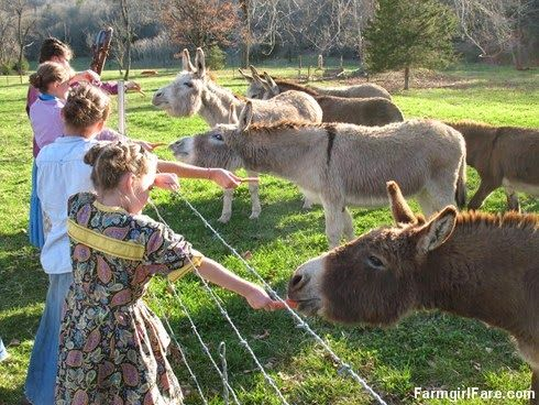 Treat time in Donkeyland! (plus a newsy farm and garden update) — Farmgirl Fare