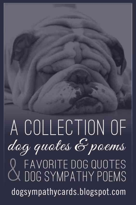 collection of dog quotes and dog sympathy poems