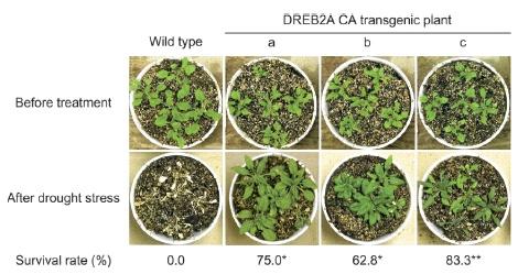 transgenic species article