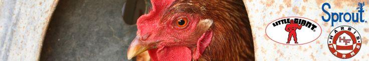Poultry Equipment - Chicken Supplies, Chickens - Mills Fleet Farm