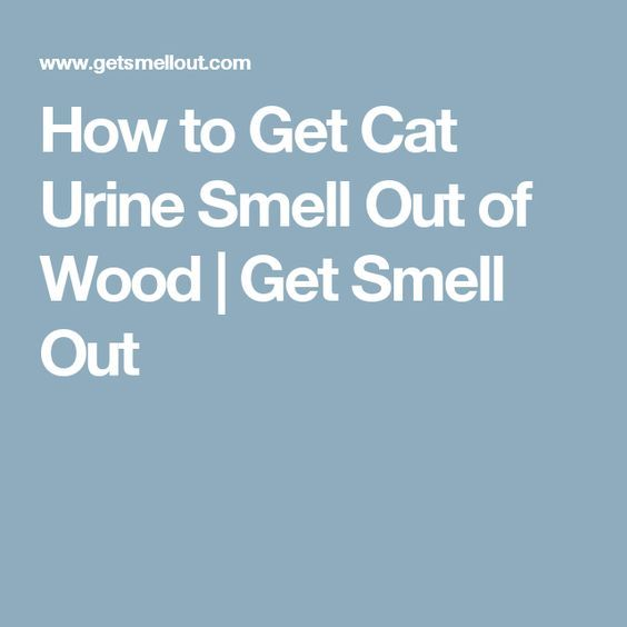how to clean moose urine smell