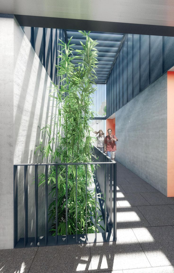 New environmentally sustainable studio apartment building in Bondi - open corridor breezeway/ bamboo garden