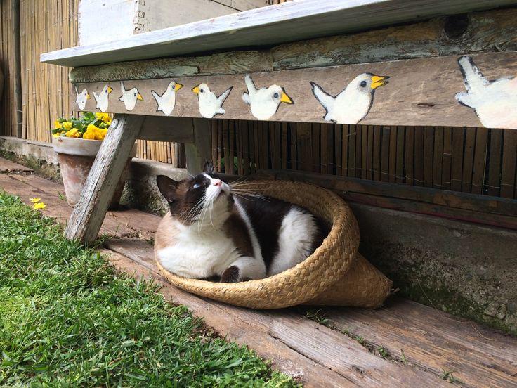 Pina in giardino