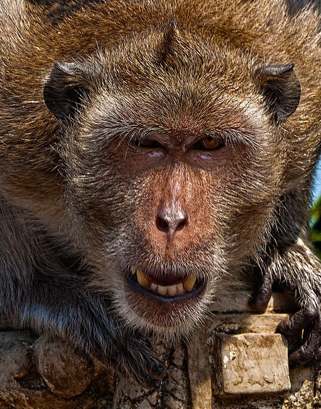 Animal Close Up Photography | All about animals | Pinterest