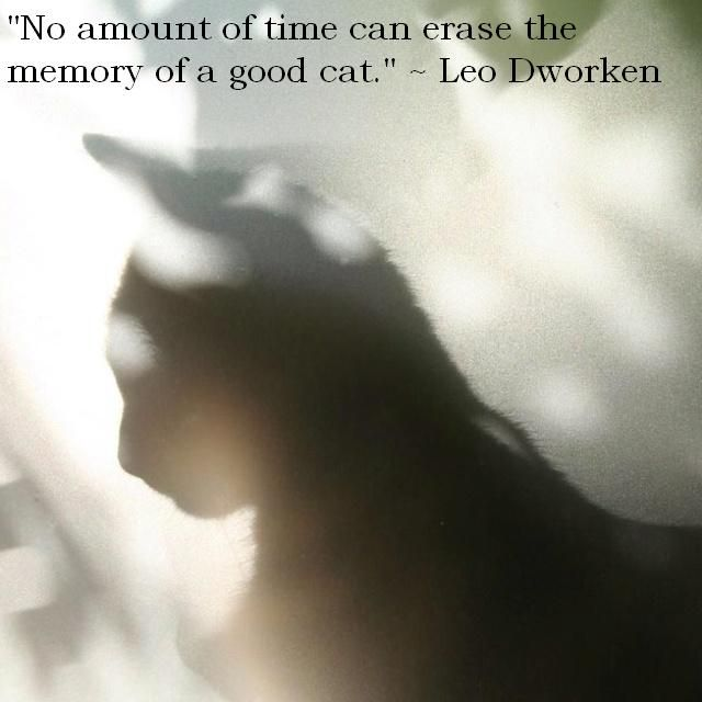 """No amount of time can erase the memory of a good cat."" Leo Dworken,.  So true"