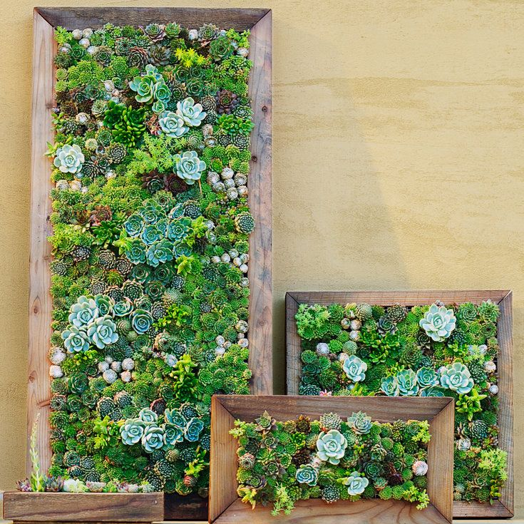 How to make your own succulent frame - How to Make Vertical Succulent Gardens - Sunset