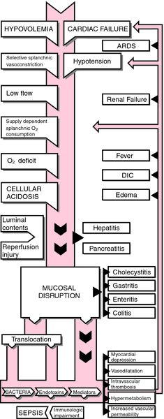 Multiple organ failure - definition of Multiple organ failure in the Medical dictionary - by the Free Online Medical Dictionary, Thesaurus and Encyclopedia.