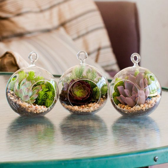 47 best images about succulents hanging plants on pinterest gardens glass globe and minis. Black Bedroom Furniture Sets. Home Design Ideas