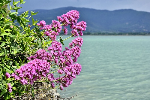 Umbria - Lago Trasimeno - Isola Maggiore