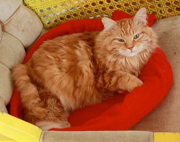 Recyclez un vieux pull en coussin pour chat « Blog de Petit Citron