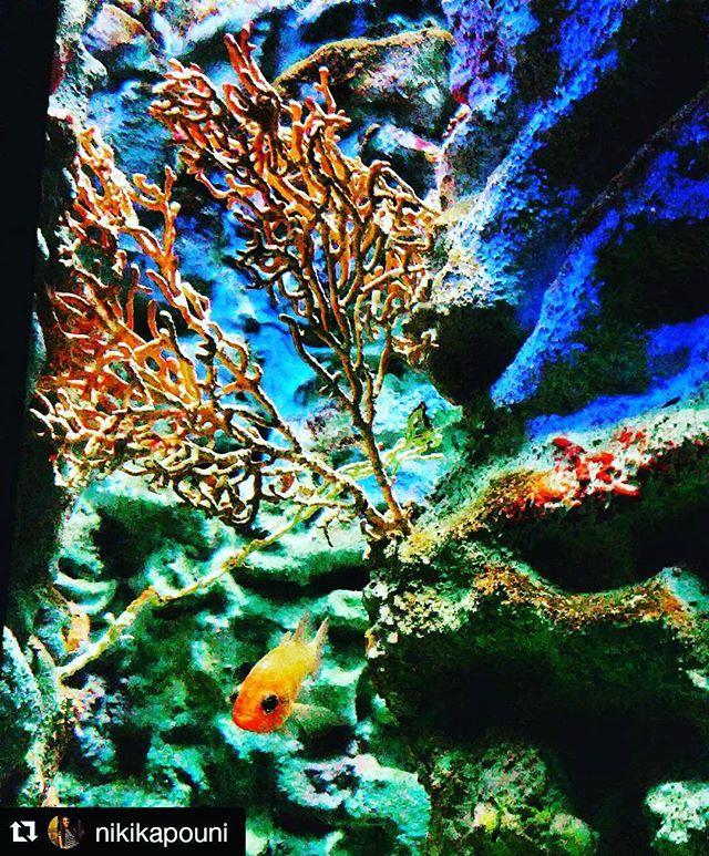 #Repost @nikikapouni with @repostapp ・・・ #stillonholiday #summerisnotoveryet #heraklion #crete #greece #cretaquarium #instagreece #vscocam #vsco #cretaquarium10years @Cretaquarium  @CreteRegion @myhersonissos #Greeksummer @VisitGreecegr @DiscoverGRcom #lovingreece  #menoumellada #cretaquarium  @heraklion_info_point  #aquarium #sea #marine #underwater #marinelife #research #greece #fish  #science #mygreeksummer #explore #discovery #kids #fun #crete #myhersonissos #vacation #media