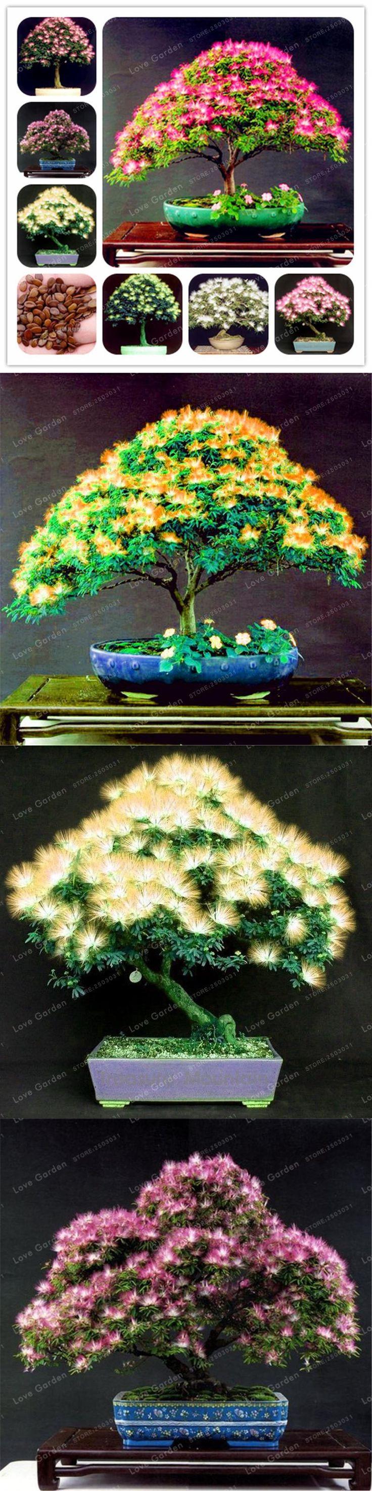 20 seeds/bag Rainbow Albizia Julibrissin Acacia Tree Seeds Bonsai Beautiful Flower Seeds Tree Seeds Pot Plants for Home Garden