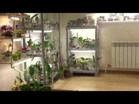 Орхидеи,фиалки,денежные деревья. Про стеллажи,подсветку и немного о моей истории... - YouTube