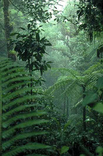 Tropical Rainforest Leaves Tropical rainforests