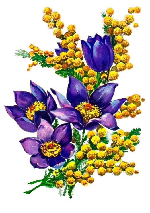 День, цветок на открытку 8 марта