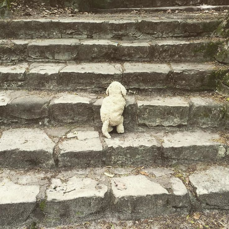 Hold on everybody. Weekend is coming. We are getting there. #stairs #Lobilat #Livelaughlobilat #doglover #hundeliebe #puppylove #puppy #antidepressivum #smile #climb #nature #stufen #kuscheltier #plushie #plushiesofinstagram #fluffy #f4fback #f4b #flauschig #park #wayup