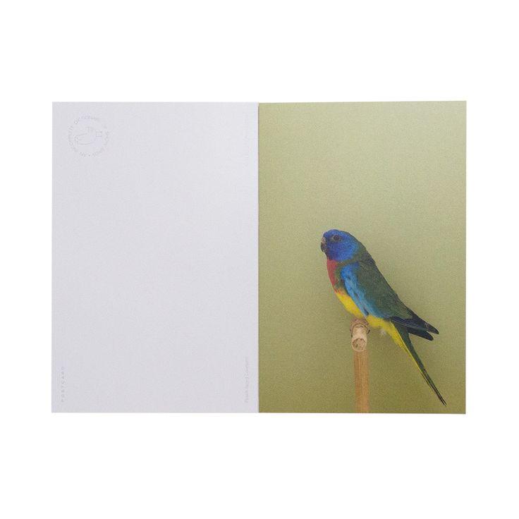 Birds ポストカードブック