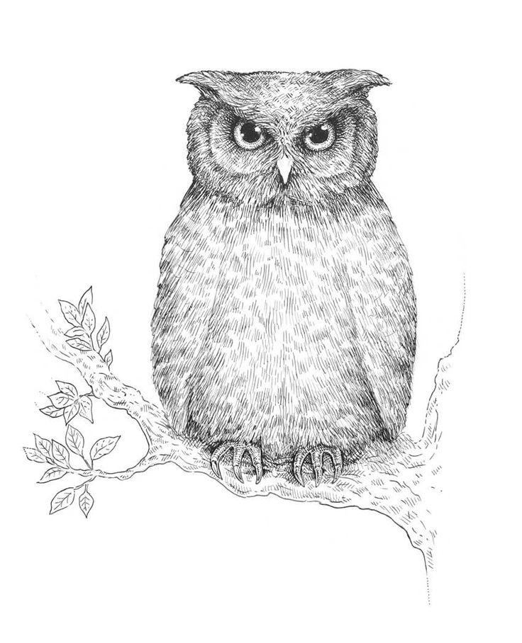 нарисовать рисунок сова