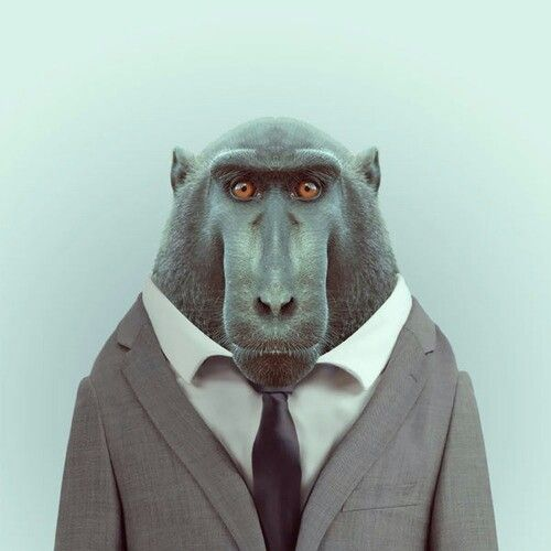 Baboon #gentleman #suit #tie #classy #animal #as #human #deaign #baboon