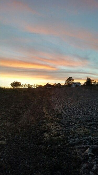Beautiful evening working on the farm