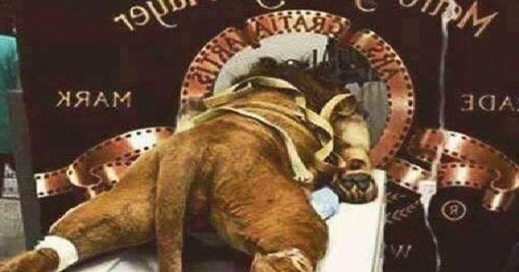 Que retiren el logo de Metro Goldwyn Mayer por ser un caso de maltrato animal encubierto! FIRMA...