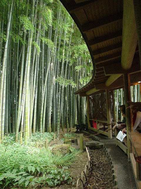 Bamboo Garden at Hokoku-ji Temple in Kamakura, Japan. 報国寺, 鎌倉, 日本