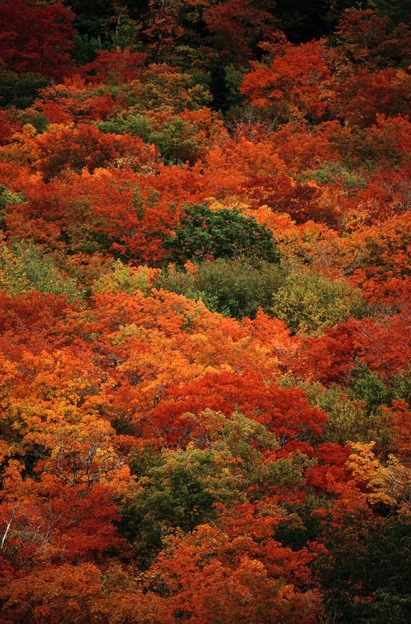 ✮ Elevated View Of Autumn Foliage....This is what it will look like here in about 3-4 weeks, already starting, beauty