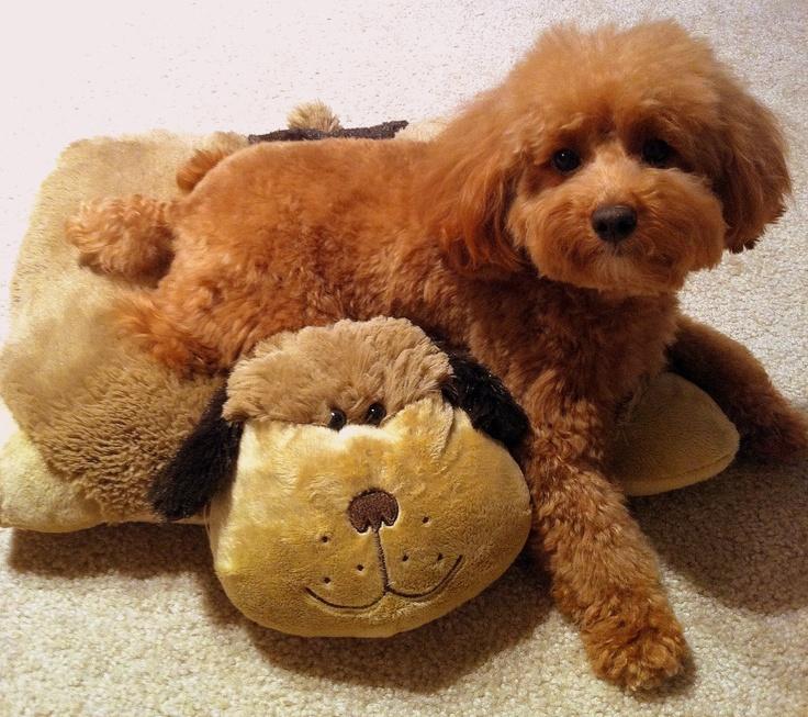 Muff and her pillow friendDiy Ideas, Pillows Met, Adorable Pup, Pillows Friends, Dogs Pillows, Ideas Mani, Met Matching, Mani Felt, Furries Friends
