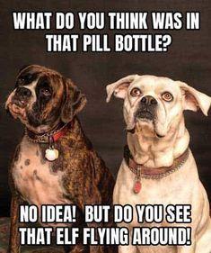 🐶🐱🐹🐰 #fun #funny #LOL Why are you so FUNNY? #click #followme #aninspirin