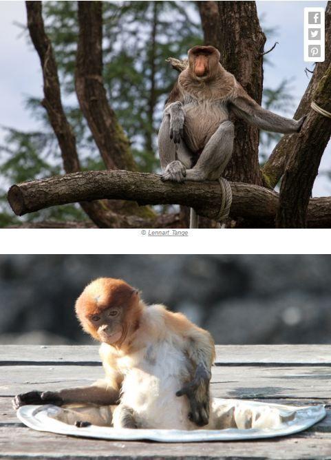 13 Hewan ini imut pas masih bayi, beda bingit (banget) kalau sudah dewasa! - http://wp.me/p70qx9-2Pe