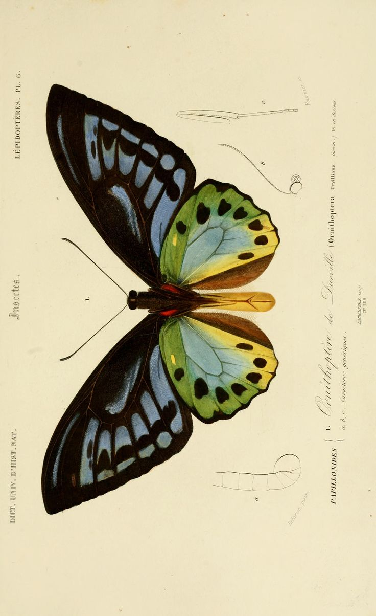 Dictionnaire universel d'histoire naturelle résumant et complétant tous les faits présentés par les encyclopédies,... / - Text