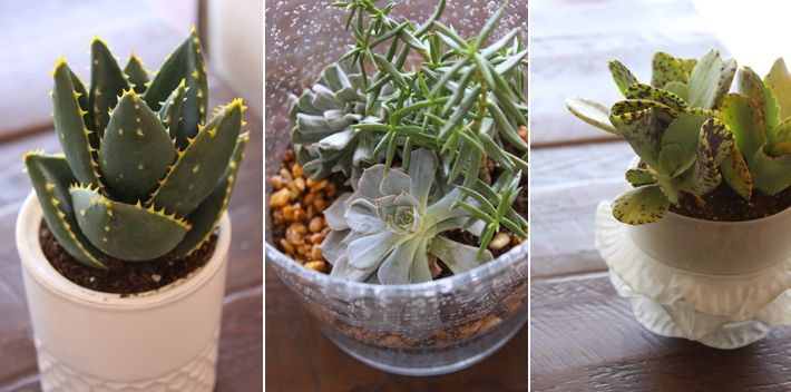 Cactus and Succulents on Pinterest