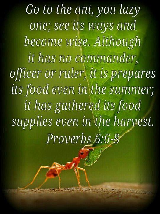 proverbs 6 16-19 kjv - Google Search