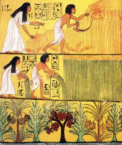 CAMPOS del IALU - Los campos de los Bienaventurados, es un fragmento de la deco de la cámara funeraria de SENNEDYEM en Tebas (dinastía Reino Nuevo). Son el difunto y su esposa trabajando los campos de Osiris. Una vez pasado el juicio de los muertos se llega aquí en barca, una vez transformado en ser resplandeciente y hacer lo que se hace en vida:  arar, cosechar y copular