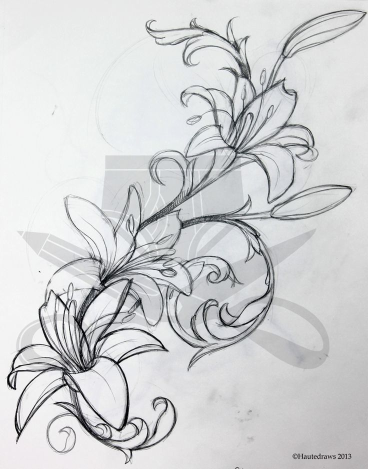 lily tattoo sketch   filigree lily   hautedraws