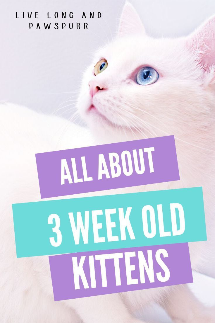 First Lets Talk About How To Tell If A Kitten Is Three Weeks Old Three Week Old Kittens Will Have Their Eyes Open Their E In 2020 Kitten Care Newborn Kittens Kittens