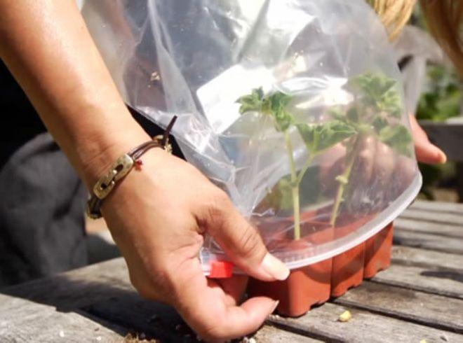 #Truco para #regar las #plantas cuando estás de #vacaciones / #Tip to #water #plants when you're out on #holidays. Más #trucos / More #tips: http://trucosyastucias.com/astucias/regar-plantas-en-vacaciones #lifehacks #astucias #greenhouse #terrario