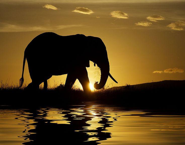 elephant sunset!
